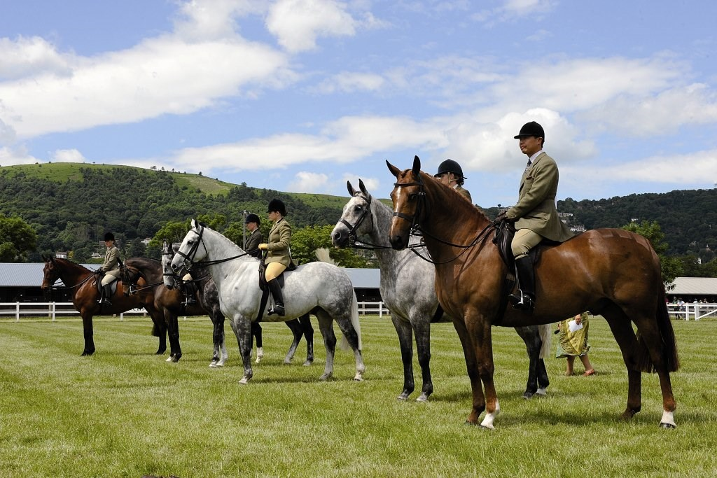 Royal Three Counties Homepage Equine.jpg