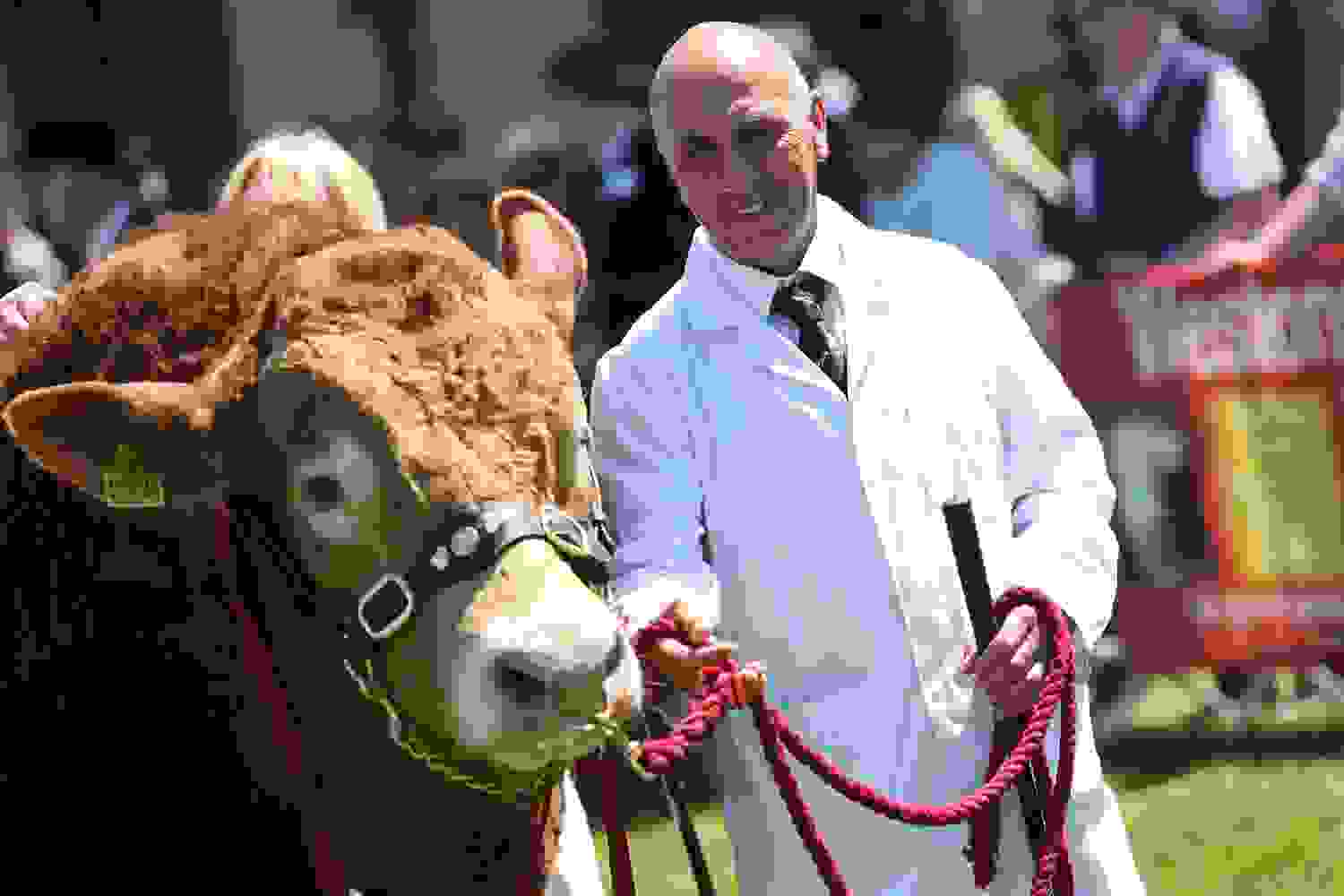 Farming Village - Cattle Judging - Royal Three Counties Show.jpg
