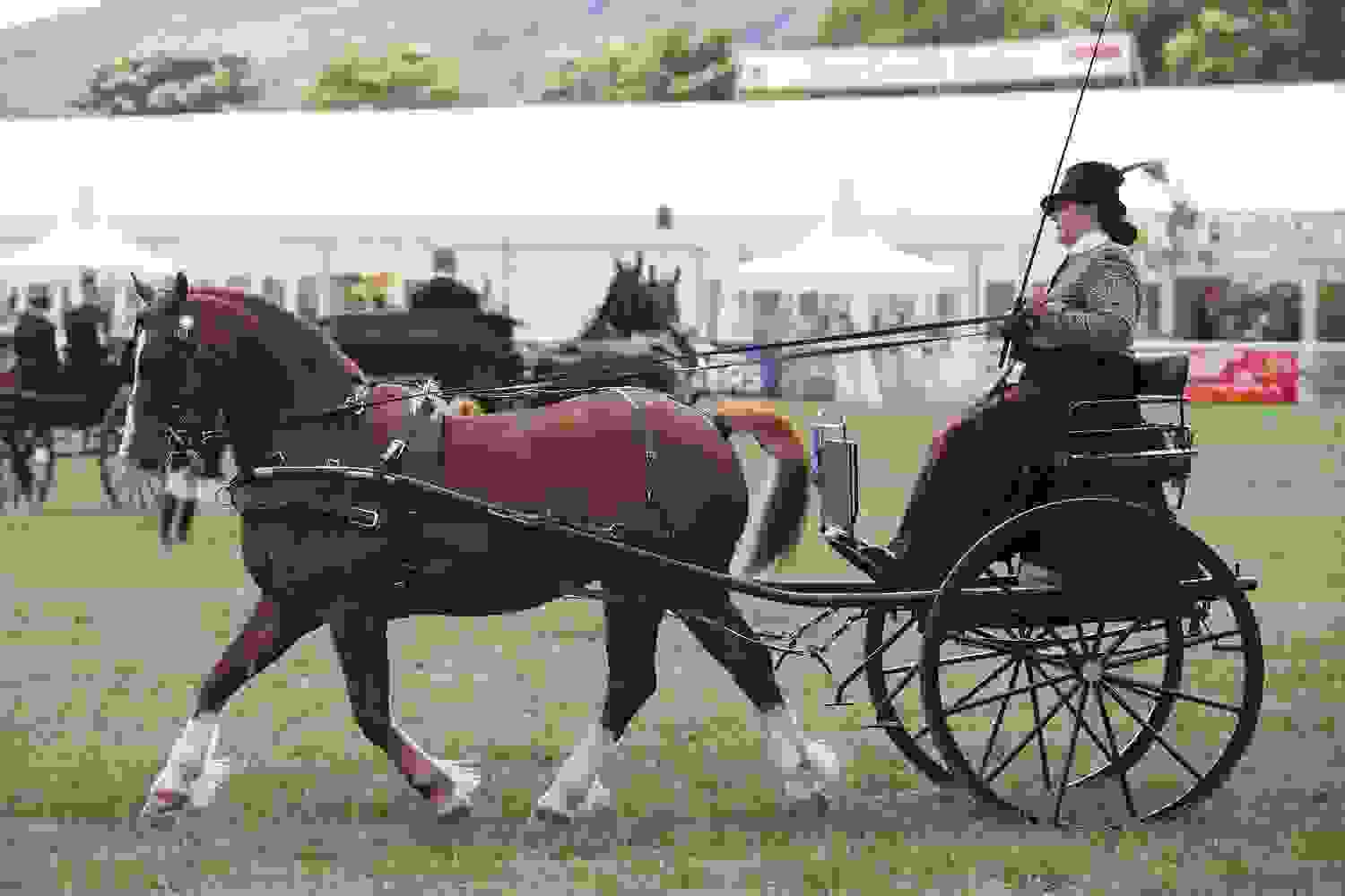 Equine Village - Driving - Royal Three Counties Show.jpg