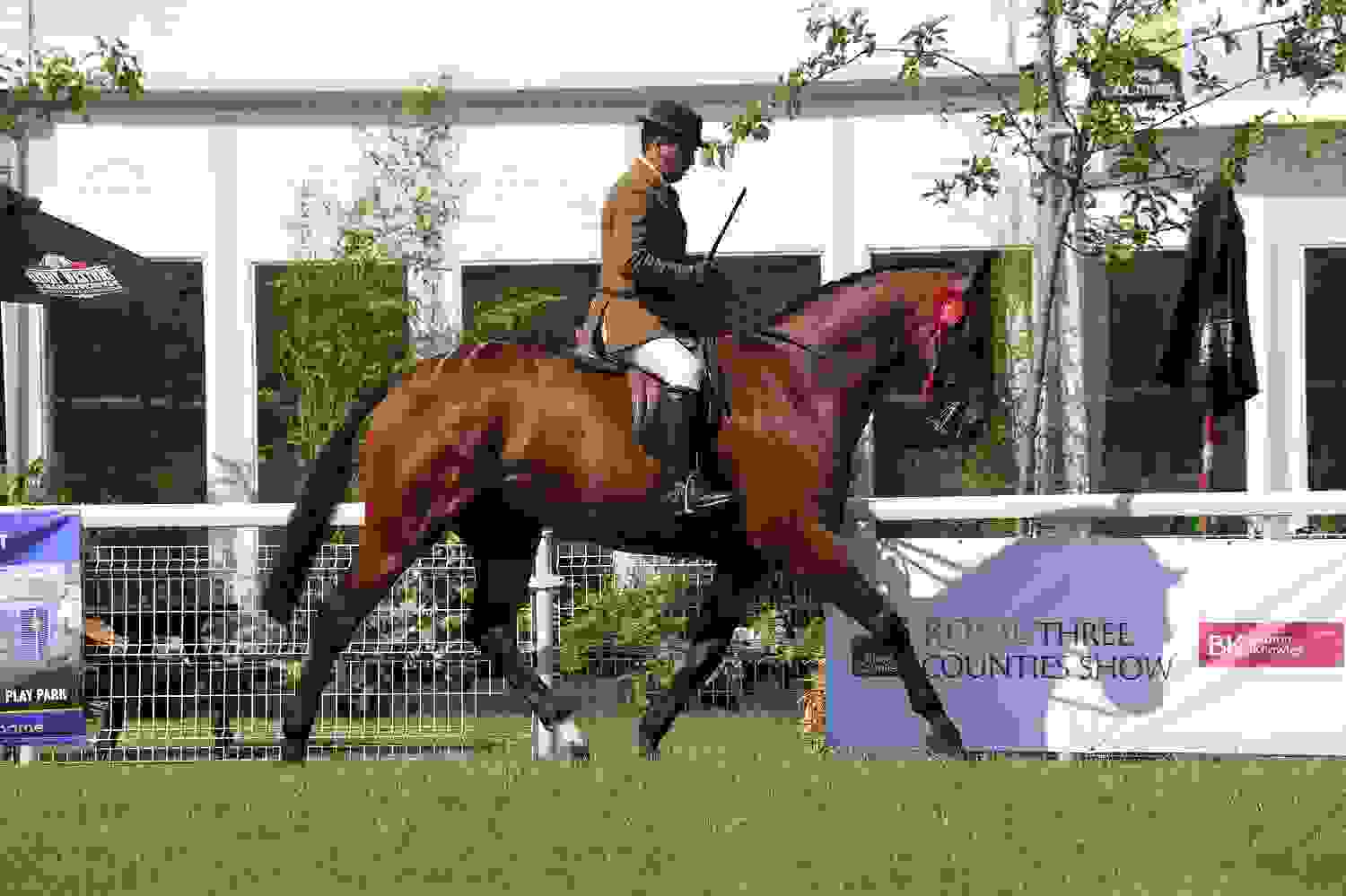 Equine Village - Main Arena - Royal Three Counties Show.jpg