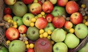 Malvern Autumn Show Apples.jpg
