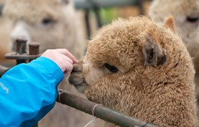 Royal Three Counties Show - Alpaca in Fur Feather and Farm.jpg